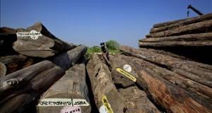 Inmovilizan 3.500 metros cúbicos de presunta madera ilegal en la selva de Perú El operativo se prolongó durante dos días y en la primera jornada se ordenó la inmovilización de 152 troncos de madera de la especie shihuahuaco, equivalente a 2.231 metros cúbicos.