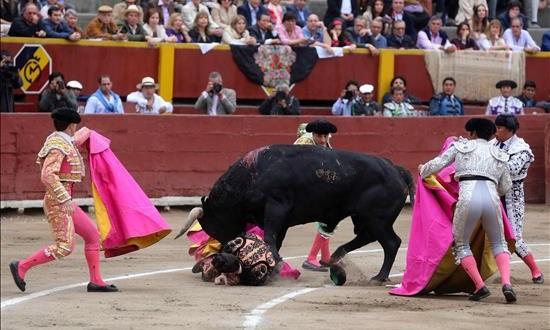 Paco Ureña corta oreja en la segunda corrida de la Feria de Lima Uno de los toros de la tarde embiste a uno de los banderilleros durante la segunda corrida de la Feria del Señor de los Milagros en la plaza de Acho en Lima (Perú).