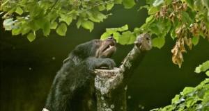 Avistan un oso de anteojos en la ciudadela de Machu Picchu Un ejemplar de oso de anteojos.
