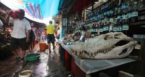 """El exótico mercado de Belén es un espectáculo único en plena selva peruana Cráneo de un caimán o """" lagarto """" en la decoración de un puesto que ofrece bebidas afrodisiacas en el tradicional """"Pasaje Paquito"""" en el mercado de Belén, Iquitos (Perú)."""