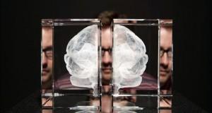 Alta dosis de cocaína provoca autodestrucción neuronal, según estudio Representación de un cerebro humano.