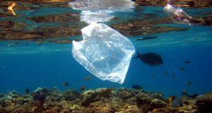Fotografía de archivo de peces y bolsas de plástico en el mar Rojo. EFE/Archivo