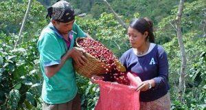 Exceso de regulación dificulta cultivar productos alternativos
