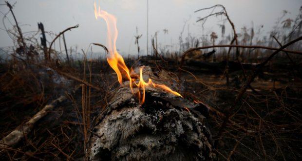 """Los incendios que consumen al Amazonas, conocido como el """"pulmón del mundo"""", han generado indignación a nivel internacional. ¿Qué antecede a esta grave situación?"""